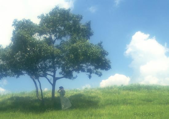 夏の日1.JPG