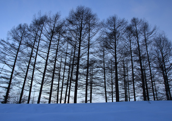 雪原の樹木.jpg