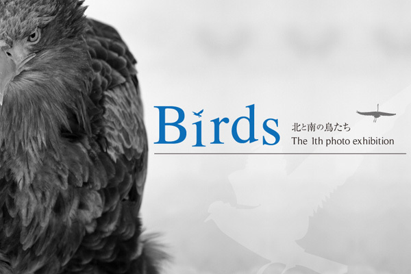 birdsDM1.jpg