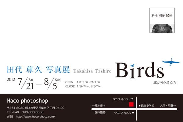 birdsDM2.jpg